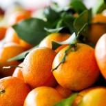 Стоимость перевозки мандаринов через абхазо-российскую границу снижена