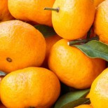 Около 23-х тонн абхазских мандаринов к Новому году будет доставлено в Донецкую и Луганскую Народные Республики