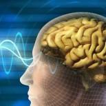 Новая техника поможет понять, как работает мозг