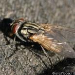 Новые технологии в производстве: мухи made in Israel