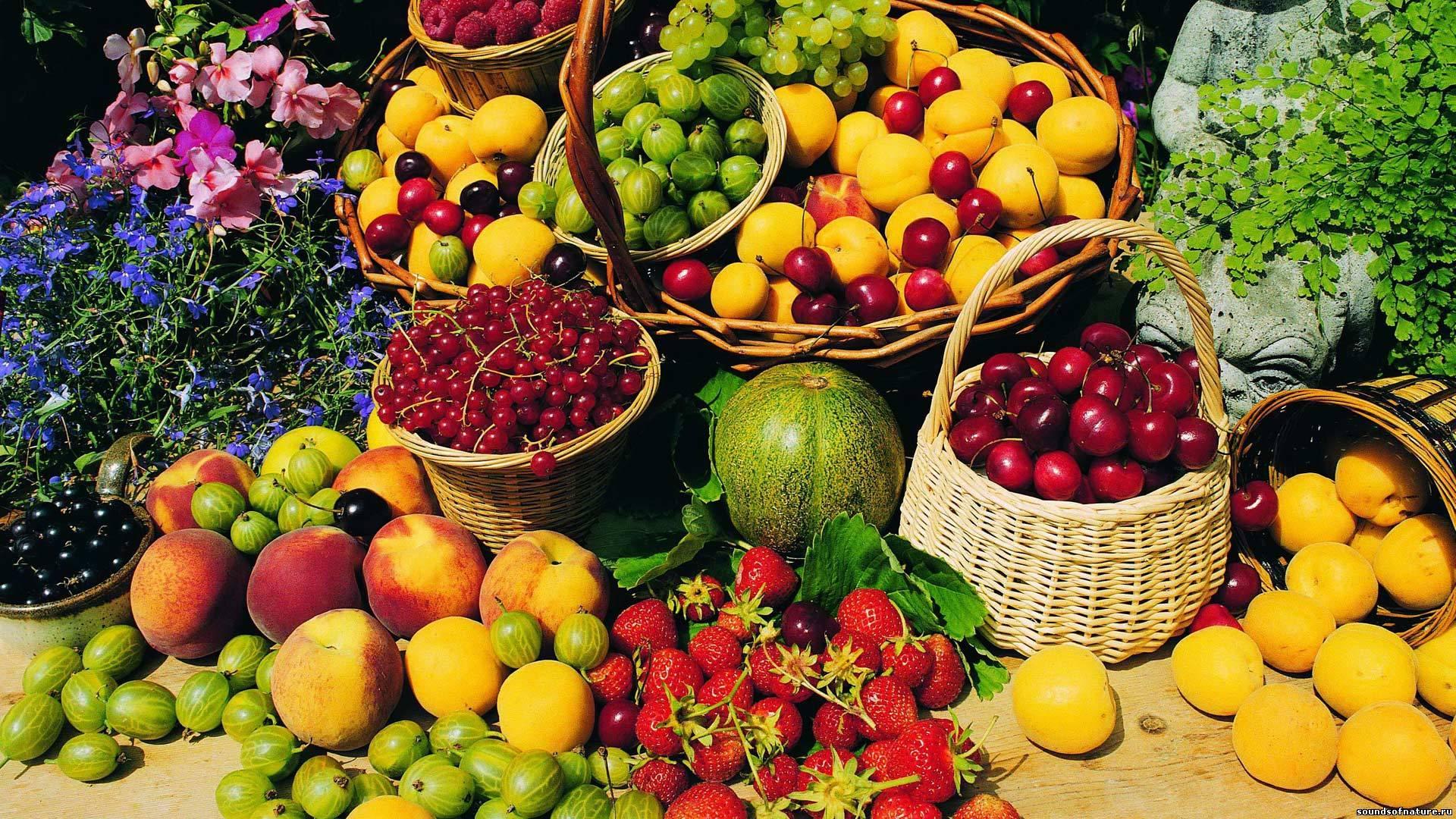 Россия может полностью отказаться от украинской сельхозпродукции